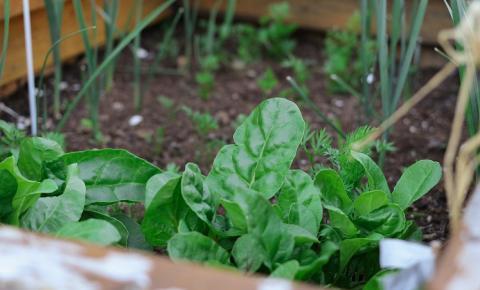 É possível ter uma horta em apartamento?